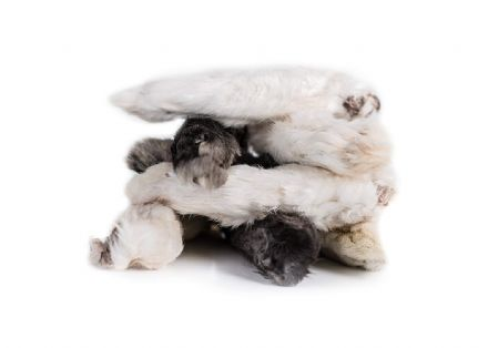 HAIRY  DEHYDRATED  RABBIT FEET